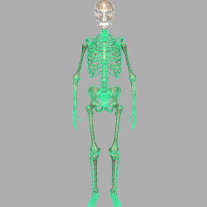skeleton-halloween-3d-model-7