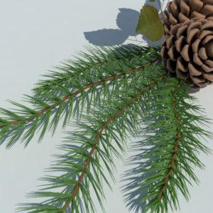pine-cone-spruce-fir-leaf-3d-model-5