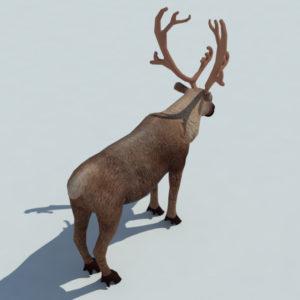 reindeer-3d-model-1