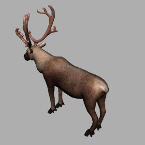 reindeer-3d-model-10