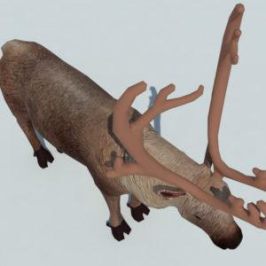 reindeer-3d-model-5