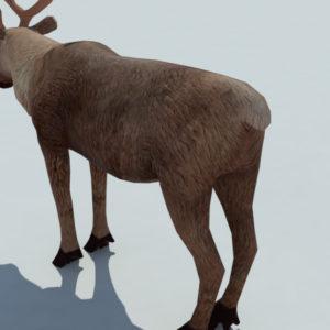 reindeer-3d-model-6