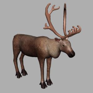 reindeer-3d-model-7
