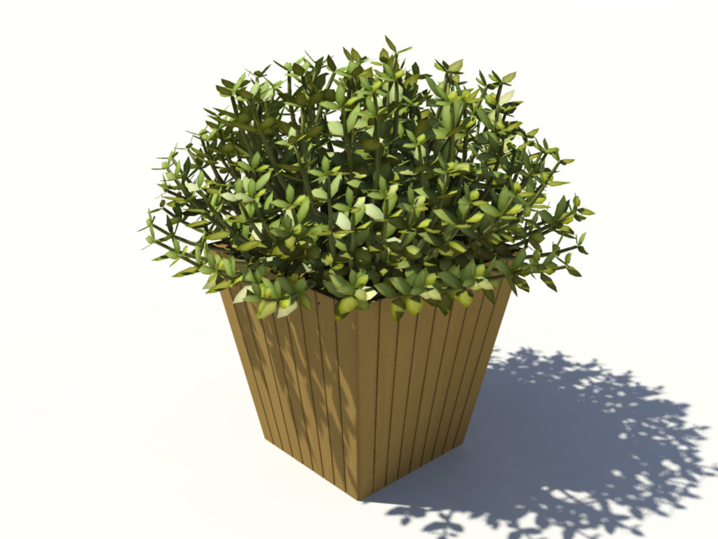 buxus-box-plant-3d-model-5