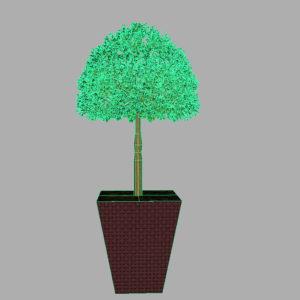 buxus-box-plant-3d-model-tree-10