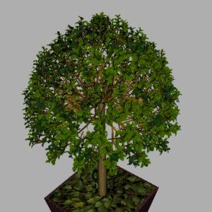 buxus-box-plant-3d-model-tree-11