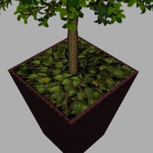 buxus-box-plant-3d-model-tree-12