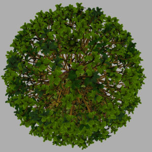buxus-box-plant-3d-model-tree-13