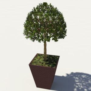 buxus-box-plant-3d-model-tree-2