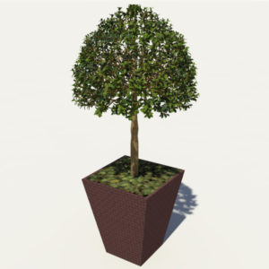 buxus-box-plant-3d-model-tree-3