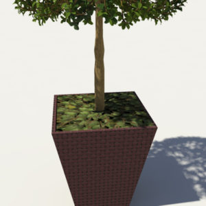 buxus-box-plant-3d-model-tree-5
