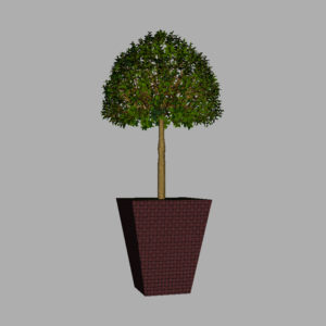 buxus-box-plant-3d-model-tree-7