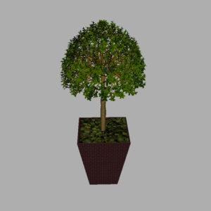 buxus-box-plant-3d-model-tree-8