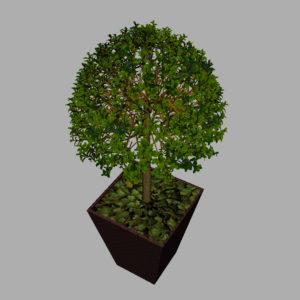 buxus-box-plant-3d-model-tree-9