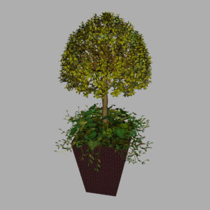 buxus-box-plant-ivy-3d-model-10