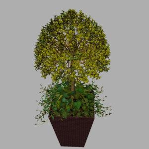 buxus-box-plant-ivy-3d-model-11