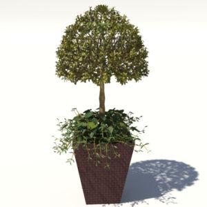 buxus-box-plant-ivy-3d-model-2