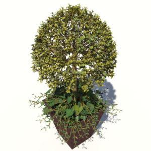 buxus-box-plant-ivy-3d-model-3