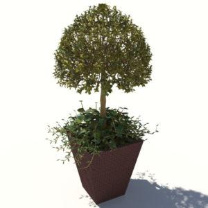 buxus-box-plant-ivy-3d-model-4