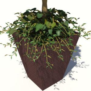 buxus-box-plant-ivy-3d-model-5