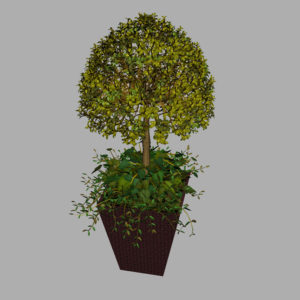 buxus-box-plant-ivy-3d-model-7