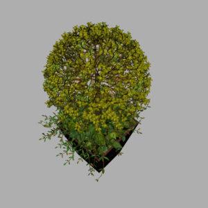 buxus-box-plant-ivy-3d-model-8