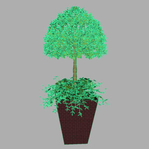 buxus-box-plant-ivy-3d-model-9
