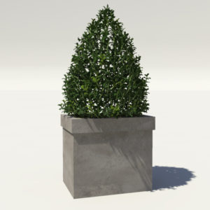 buxus-box-plant-pyramid-3d-model-1