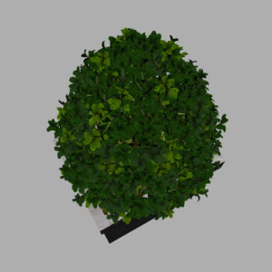buxus-box-plant-pyramid-3d-model-10