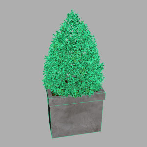 buxus-box-plant-pyramid-3d-model-11
