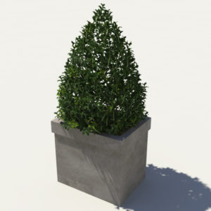 buxus-box-plant-pyramid-3d-model-2