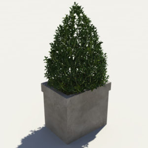 buxus-box-plant-pyramid-3d-model-3
