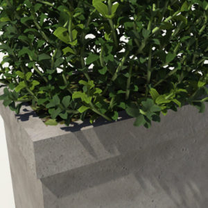 buxus-box-plant-pyramid-3d-model-5