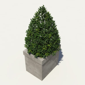 buxus-box-plant-pyramid-3d-model-6