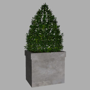 buxus-box-plant-pyramid-3d-model-7