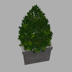 buxus-box-plant-pyramid-3d-model-8