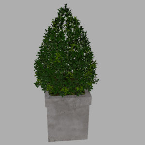 buxus-box-plant-pyramid-3d-model-9