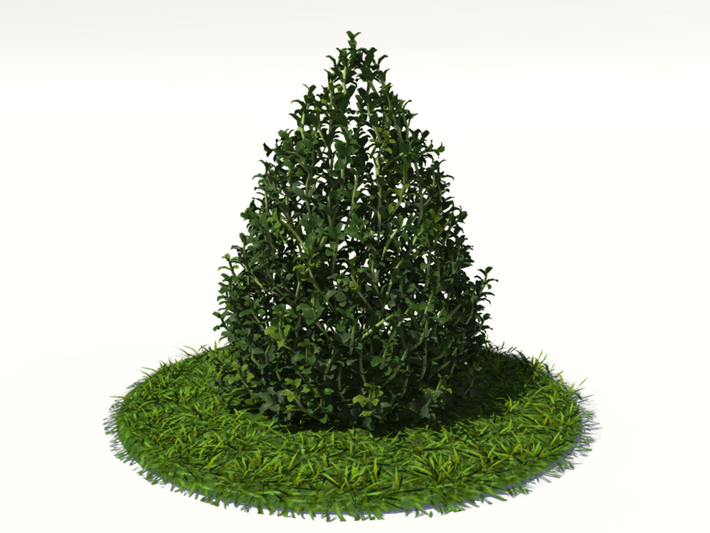 buxus-plant-cone-shape-3d-model-on-grass-1