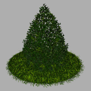 buxus-plant-cone-shape-3d-model-on-grass-10