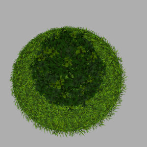 buxus-plant-cone-shape-3d-model-on-grass-11
