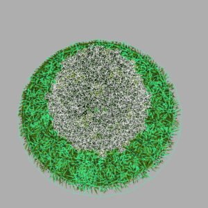 buxus-plant-cone-shape-3d-model-on-grass-12