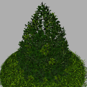 buxus-plant-cone-shape-3d-model-on-grass-13