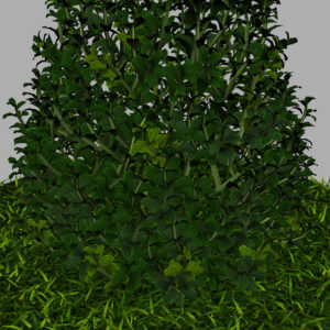buxus-plant-cone-shape-3d-model-on-grass-14