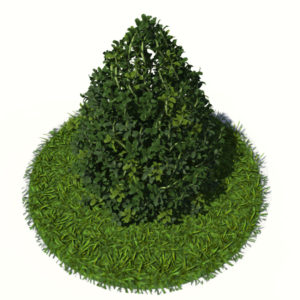buxus-plant-cone-shape-3d-model-on-grass-2