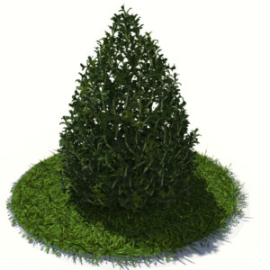 buxus-plant-cone-shape-3d-model-on-grass-3