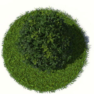 buxus-plant-cone-shape-3d-model-on-grass-4