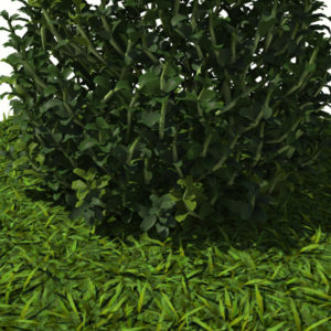 buxus-plant-cone-shape-3d-model-on-grass-5