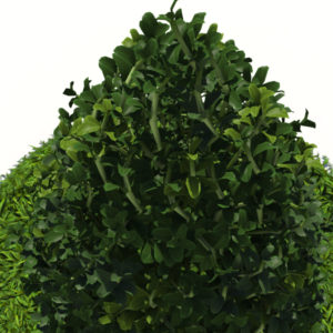 buxus-plant-cone-shape-3d-model-on-grass-6