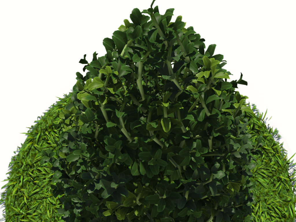 buxus plant cone shape 3d model realtime 3d models world
