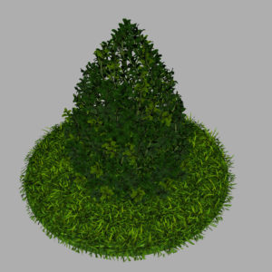 buxus-plant-cone-shape-3d-model-on-grass-7